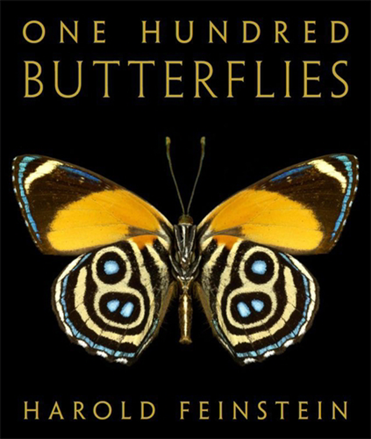 One Hundred Butterflies: The Butterfly Photographs of Harold Feinstein