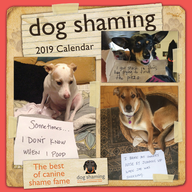 Dog Shaming 2019 Square Wall Calendar