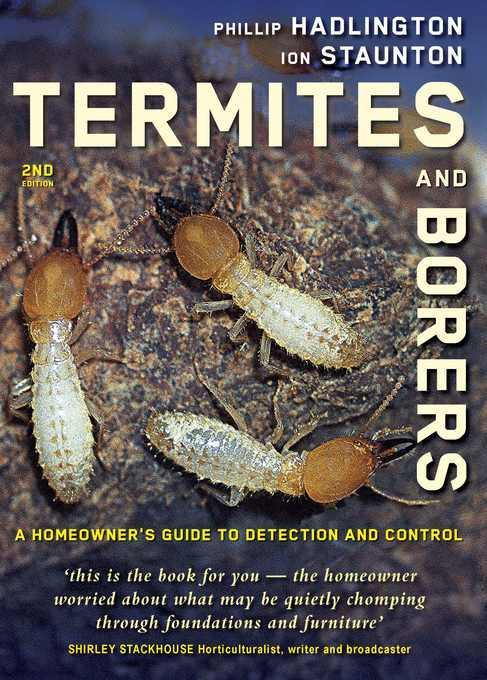 Termites and Borers: A Homeowner's Guide to Detection and Control