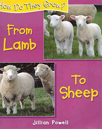How Do They Grow: Lamb to Sheep