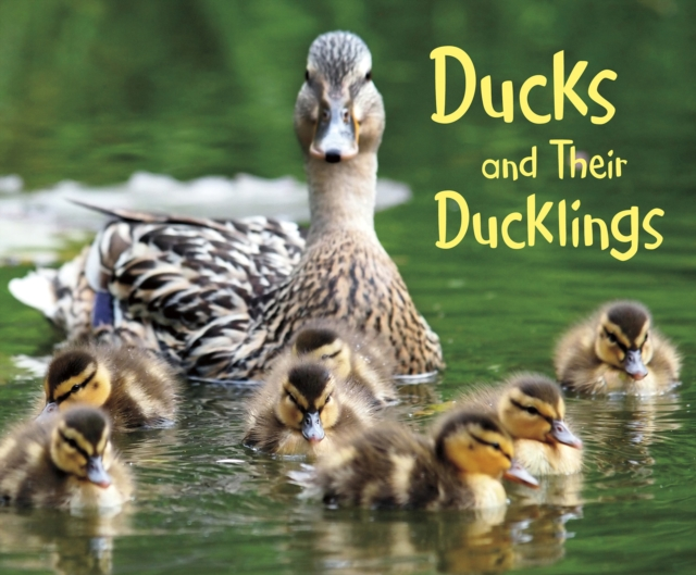 Ducks and Their DucklingsPebble Plus: Animal Offspring by Margaret Hall, ISBN: 9781474756273