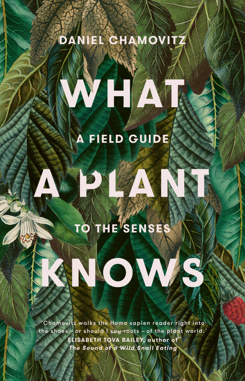 What a Plant Knowsa Field Guide to the Senses