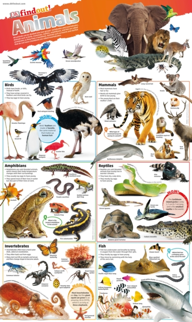 DKfindout! Animals Poster by DK, ISBN: 9780241295786