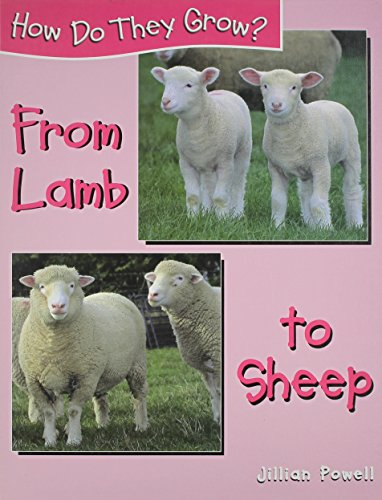 From Lamb to Sheep (How Do They Grow?)